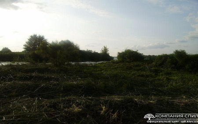 Покос камыша в Киеве и Киевской области