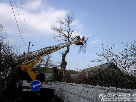кто должен спиливать аварийные деревья